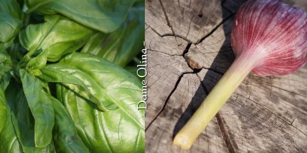 Pesto végétal