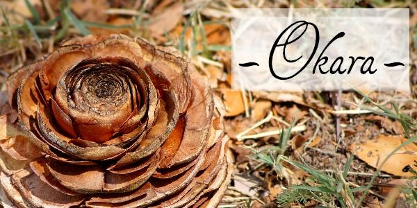 Okara (résidu de boisson végétale) – Conservation et utilisation